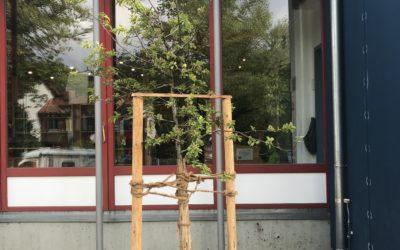 Bericht von Isar TV zur Baumpflanzaktion